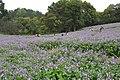 2014-04-04 石象湖 郁金香 liuzusai - panoramio (86).jpg