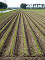 20140606 Landschap Oostelijk Flevoland langs Noordertocht bij Vuursteenweg.jpg
