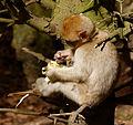 2016-04-21 13-52-14 montagne-des-singes.jpg