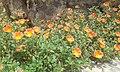 20170331 104309 flowers.jpg