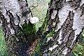 2019-10-05 Hike Forst Leucht. Reader-07.jpg
