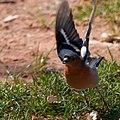 2021-04-03 11-33-12 oiseau 02.jpg