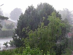 Chuva sobre algumas árvores