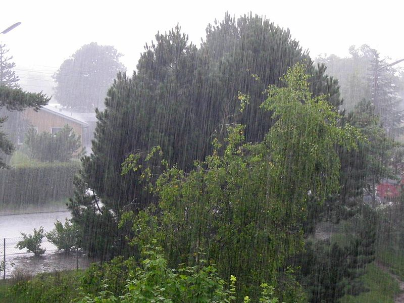 Photo by Tomasz Sienicki Via Wiki Media Commons Heavy rainfall on a suburban street. There are mixed coniferous and deciduous trees in the foreground.