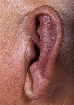 prurito all'orecchio - prurito-orecchio
