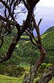 Açores 2010-07-20 (5070808558).jpg