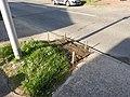 A2 road, around Three Crutches, Strood reseeding verge 4882.jpg