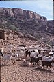 ASC Leiden - W.E.A. van Beek Collection - Dogon lifestock 01 - A herd of goats near the mountain of Yugo, Banani, Mali 1980.jpg