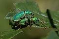 A Bug's Life... (631803109).jpg