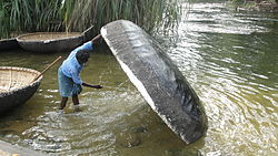 A coracle man wahing the coracle.JPG
