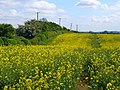 A field alongside Londesborough Road - geograph.org.uk - 562527.jpg