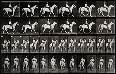A man riding a horse. Photogravure after Eadweard Muybridge, Wellcome V0048731.jpg