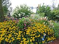 A riot of fall flowers (6163968215).jpg