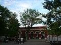 Acàcia de l'estació de Sant Andreu Comtal P1500902.jpg