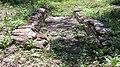 Acequia (irrigation ditch) with compuerta (13ce9dca-70c3-4f2f-93b8-b31e8189df7e).jpg