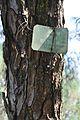Acharya Jagadish Chandra Bose Indian Botanic Garden - Howrah 2011-01-08 9807.JPG