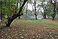 Acharya Jagadish Chandra Bose Indian Botanic Garden - Howrah 2011-02-20 1639.JPG