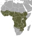 African Civet area.png