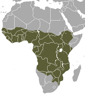 African Civet area