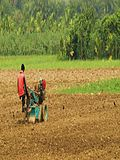Agriculture in Bangladesh 5.JPG