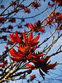 Ajuda botánico 15.jpg