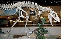 Albertosaurus sarcophagus (Upper Cretaceous; Alberta, western Canada) 1 (15390316746).jpg