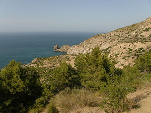 Tetraclinis - Tetraclinis forest at Al Hoceima National Park