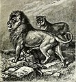 All about animals. Facts, stories and anecdotes (1900) (14797698273).jpg