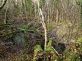 Allodon nov 2012 50 (8211808702).jpg