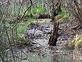 Alter Entwässerungskanal im Dievenmoor 01.jpg