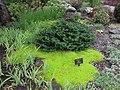 Aménagement paysager à la Villa Estevan, aux Jardins de Métis, Grand-Métis, Québec - panoramio (6).jpg