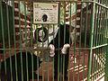 American Black Bear at Giza Zoo.JPG