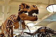 Stanza dei dinosauri saurischi