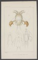 Analges - Print - Iconographia Zoologica - Special Collections University of Amsterdam - UBAINV0274 004 04 0069.tif