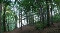 Andover, MA, USA - panoramio (1).jpg