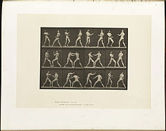 Animal locomotion. Plate 338 (Boston Public Library).jpg