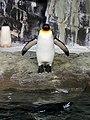 Antarctica- Empire of the Penguins (36471865513).jpg