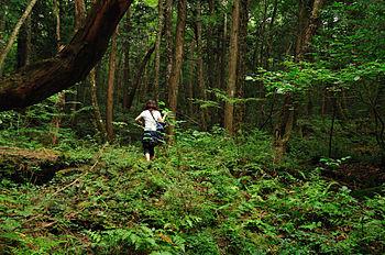 Aokigahara forest in Yamanashi, Japan.