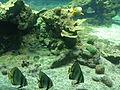 Aquarium Genoa 49.JPG