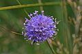 Araignées, insectes et fleurs de la forêt de Moulière (Les Chirons Noirs) (28938558422).jpg