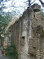 Arbol sobre pared de la Ex-Hacienda - panoramio.jpg