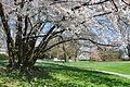 Arboretum Zürich 2011-03-29 13-37-52.JPG