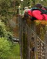 Arboretum bridge 2 (7123547309).jpg