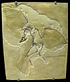 Archaeopteryx lithographica - IMG 0679.jpg
