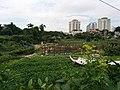 Around Xuan La 18.jpg