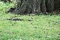 Arsenal Park - panoramio (1).jpg