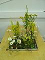 Asetelma - vegetatiivinen tyylisuunta.JPG