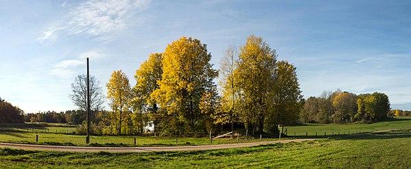 Aspen groves in Öhed