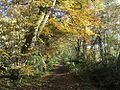 Autumn on the Monarch's Way - geograph.org.uk - 282406.jpg