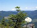 BLM Botany 09 (6871305083).jpg